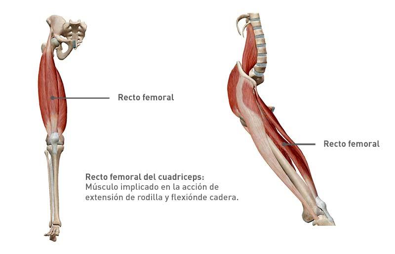 recto femoral